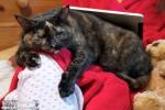 cat one a lap