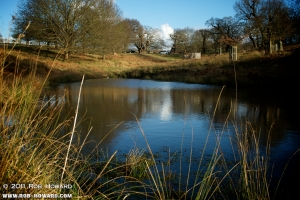 not a duck pond
