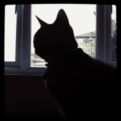 Silhouettes and cats. Why photograph anything else?
