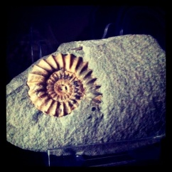 Despite having found this fossil years ago, I've never actually photographed it.