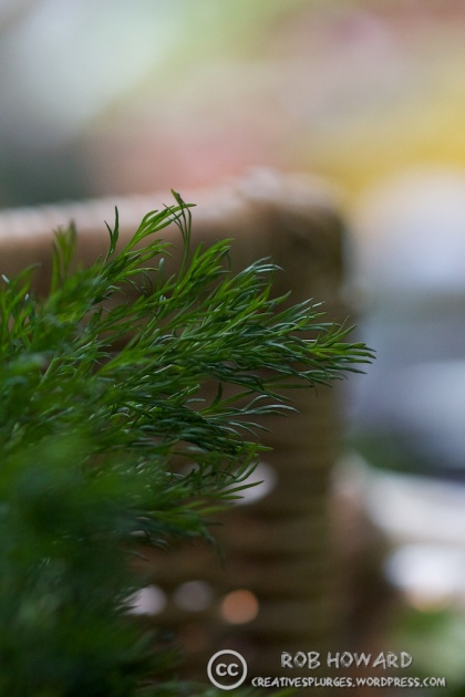 I love the clarity of the stuff and the bokeh of the background. | 1/500sec, f/2.8, ISO 1600, 100mm (cropped)