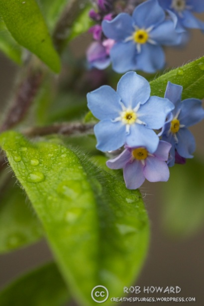 macro shot of small blue flowers with green leaves