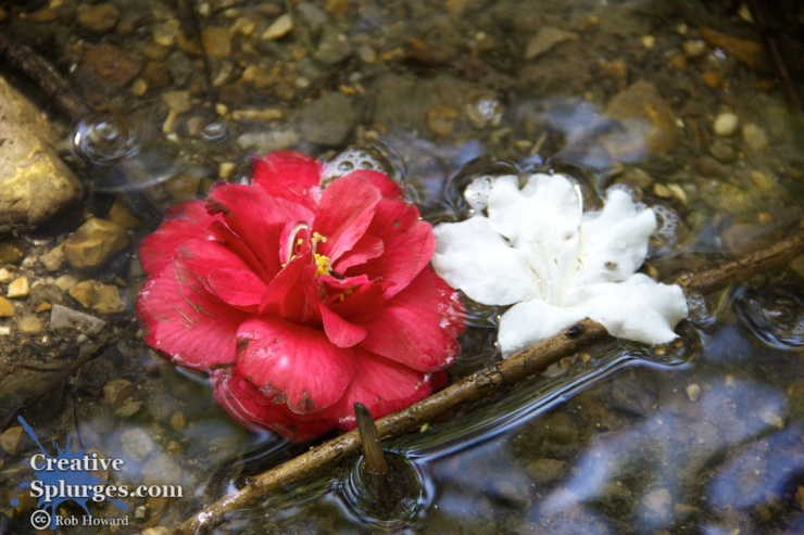 two flowers in shallow water