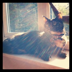 Cat, sunbathing