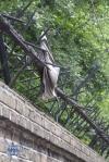 A rag on the fence of Buckingham Palace Gardens