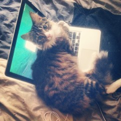 August_16__2014_at_1023AM_Le_sigh.__cat__kitten__MacBook__Apple
