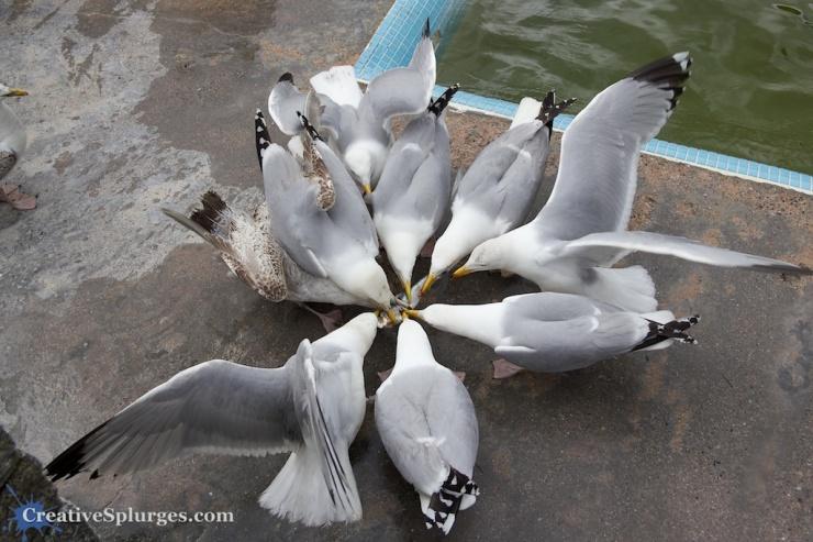 Stupid seagulls.