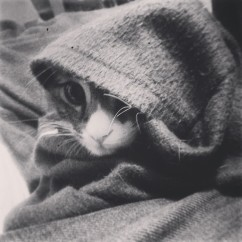 May_11__2014_at_0856PM_Hobo__kitty