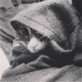 May_11__2014_at_0856PM_Hobo__kitty