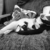 May_11__2014_at_0859PM_Broken__kitty