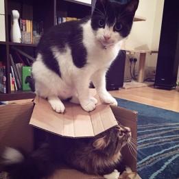 Rambow & Freddie