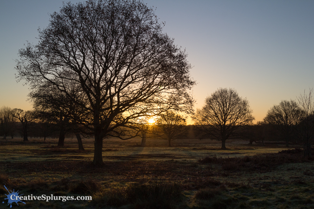 Early Morning, Richmond Park